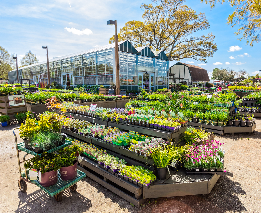 Birth of the Garden Center Outlet to know